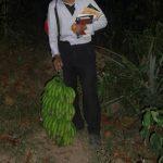 南米・ペルーのバナナの種類とバナナの樹液が服についた時の洗濯の仕方!