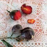 南米ペルーの変わっていて珍しい果物・Ciruela de fraile シルエラ デ フライレ