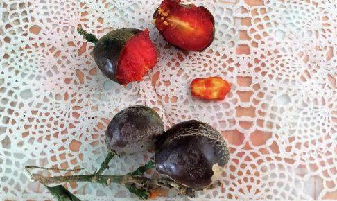 南米、ペルー、果物、Ciruela de fraile、シルエラ デ フライレ