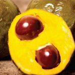 ペルーの果物ルクマはインカ時代からのスーパーフード! Lúcuma