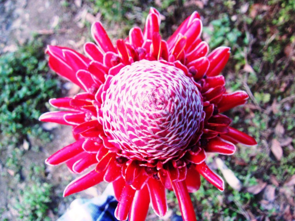 ペルー, ジャングル, 花