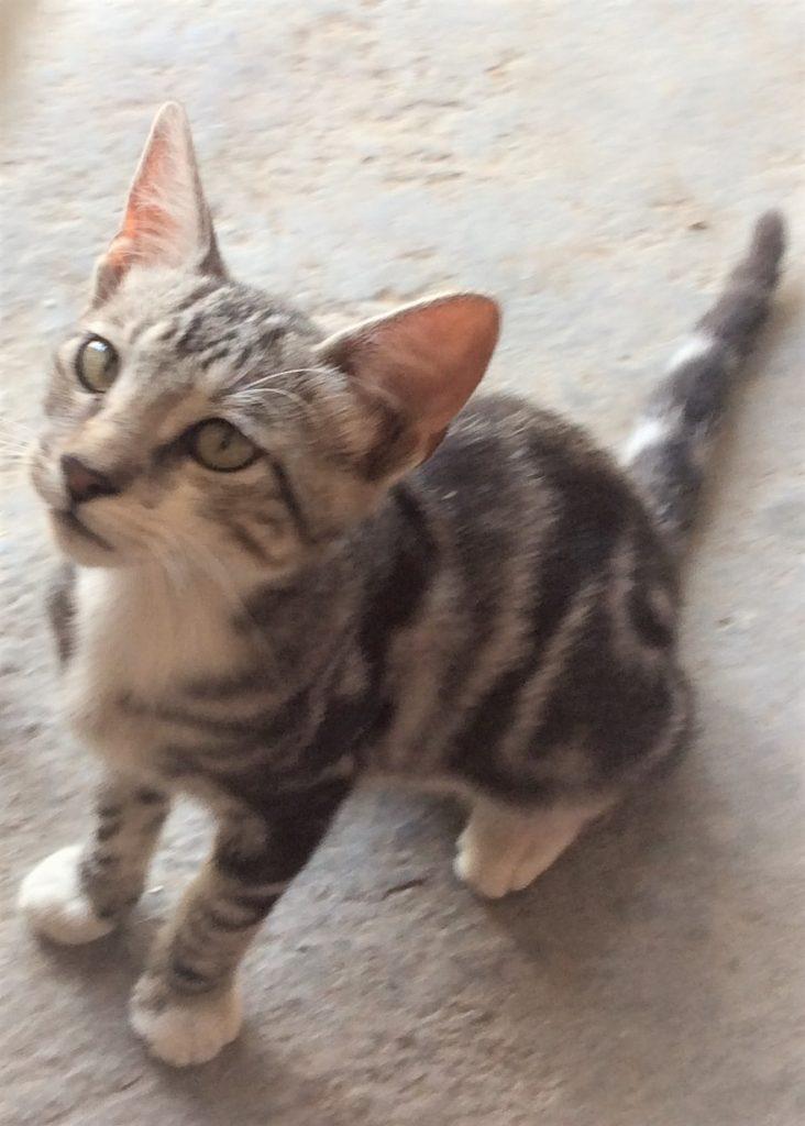 猫、かわいい、ペット