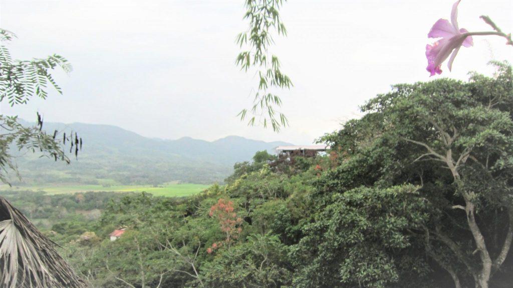 ペルー、観光スポット、博物館、蘭
