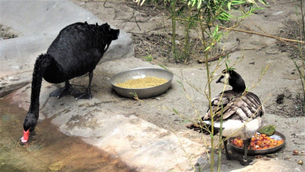 ペルー、観光スポット、動物園