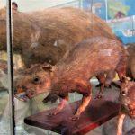 ぺルーの変わった博物館!トルヒージョ動物学・剥製博物館!ちょっとグロイし臭い!