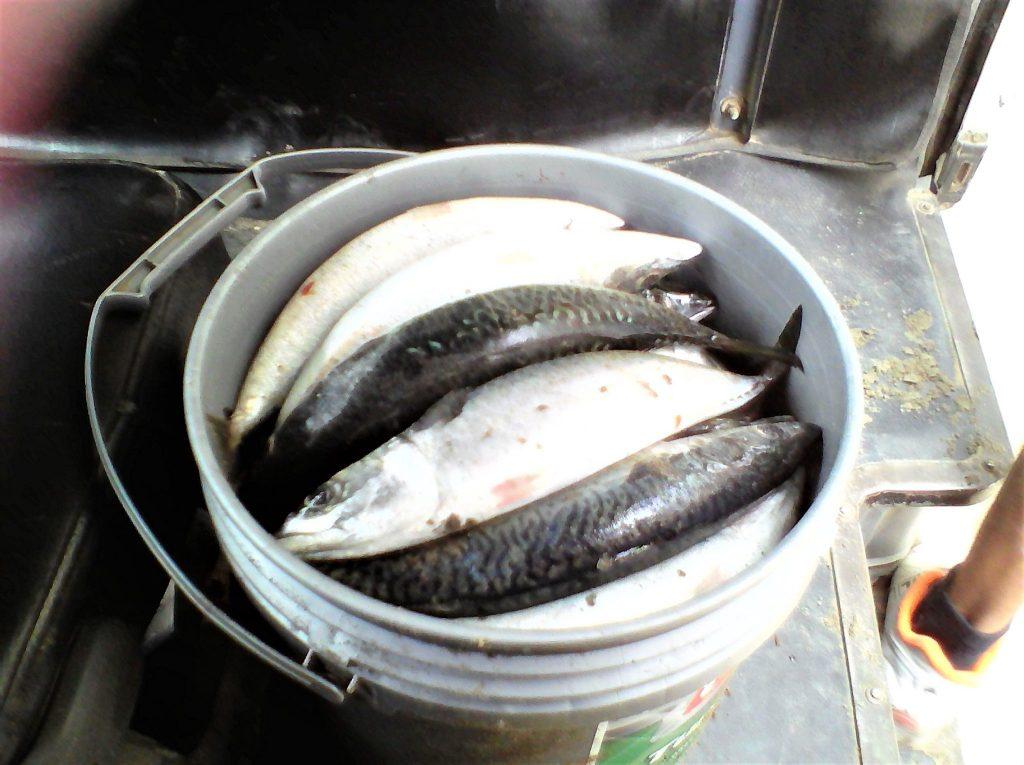 ペルー、おいしい、魚