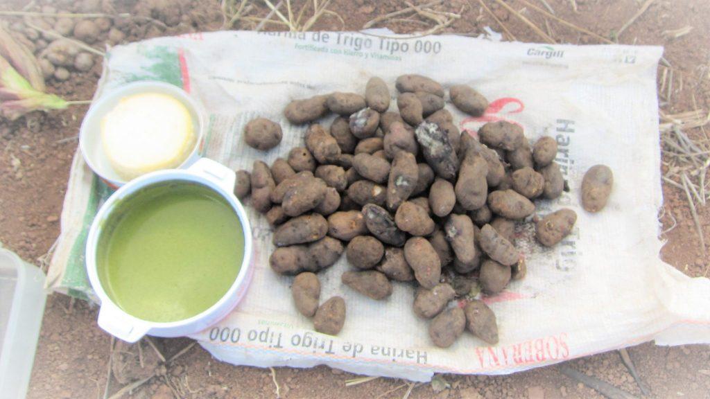 クスコ、ペルー料理