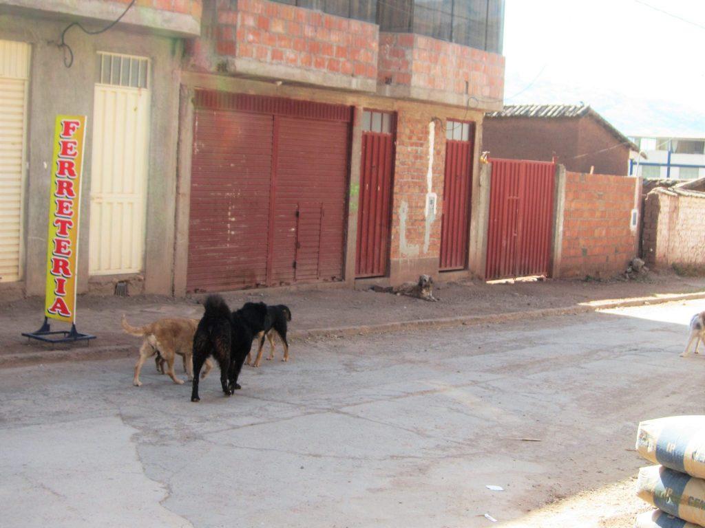 ペルー、野良犬、狂犬病