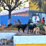 ペルーあるある、ペルーには野良犬がいっぱい。旅行前に狂犬病の注射は必要か?