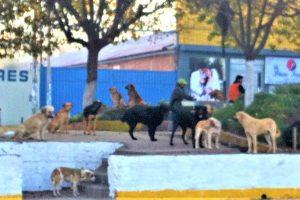 ペルー、野犬、野良犬、狂犬病