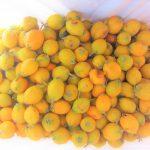 ペルーの珍しい果物 Níspero ニスペロ!日本の果物ビワの仲間セイヨウカリン!