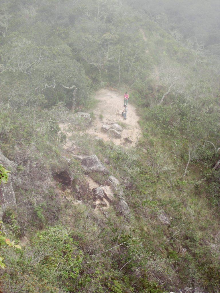 ペルー、観光スポット、ジャングル