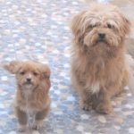ペルーで見かけたかわいい犬の写真集。常時更新予定