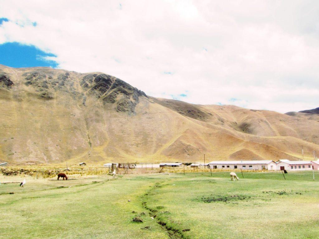 ペルー、クスコ、観光スポット、温泉、アルパカ