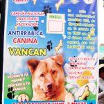 南米ペルーの海外生活でビックリ!ペットの犬の虚勢手術を公園で!?