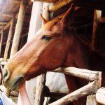 ペルー・クスコの観光スポット、ピサック近くの乗馬、バーベキューもできる薬湯温泉