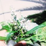 ペルー・アンデスのおいしい薬草茶 Cedroncillo はさわやかな柑橘系の香り♪クスコの街路樹としても生えている