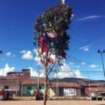 ペルー・クスコ2月の習慣 Yunza ジュンサ(Yunzada ジュンサーダ)木を斧で切り倒した者勝ち!