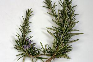 Rosemary、ペルー、薬草、スパイス、ローズマリー