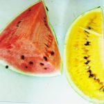 夏の果物の王様スイカは、南米ペルーでは安い!南米太陽の恵みで、さらに甘くておいしい!スイカの栄養素と健康への効能、効果