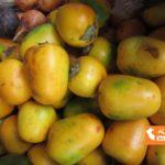 ペルー・ジャングルのすっぱい果物 Cocona の栄養、効能、効果と Cocona ジュースの簡単レシピ!熱い時のジュースやアイスクリームなどにぴったり