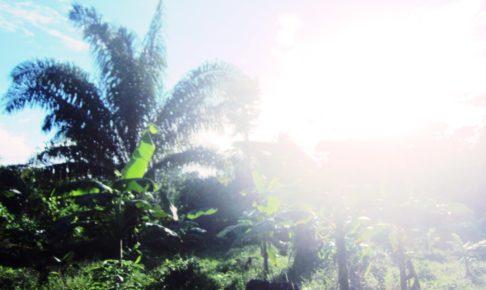 ペルー, ジャングル, Madre de Dios, Mazuko