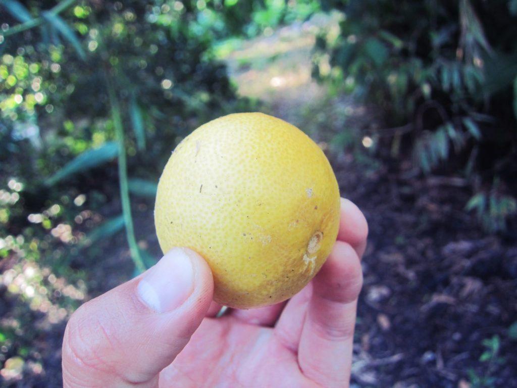 ペルー, 果物, フルーツ, Lima, 健康, 栄養, 効能, 効果