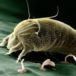 ペルーの山岳地帯アンデス地方でよくある害虫被害!イエダニの虫刺されに注意!