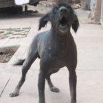 ペルーの毛のない犬、ペルー犬!Perro Peruano ペロ・ペルアーノ!毛がなくても体温が高いから大丈夫!?