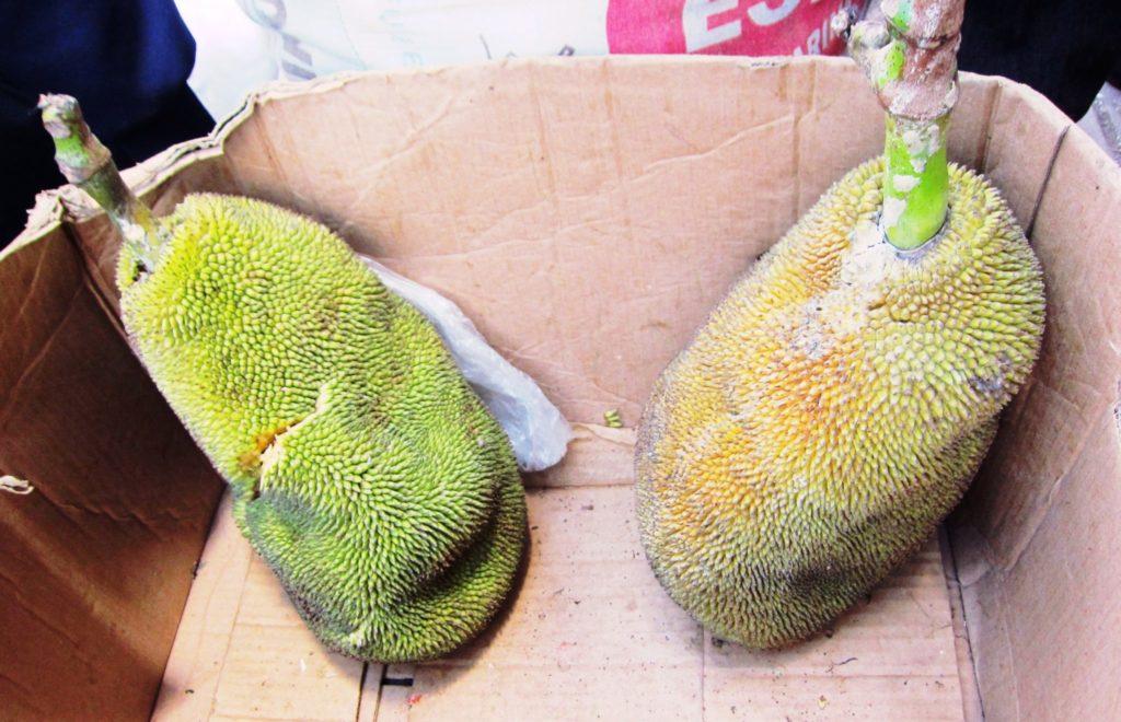 ペルー, おいしい, 果物, Yaca, Panapen, Arbol del Pan, jackfruit