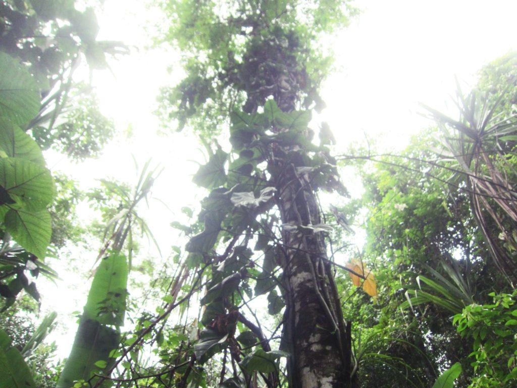 アマゾン, ジャングル, ペルー, マヌー, 国立公園, ツアー, 温泉, Atalaya, Tropical