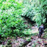 アマゾン, ジャングル, ペルー, マヌー, 国立公園, ツアー