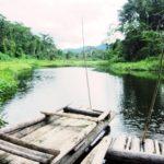 南米のジャングル、アマゾン熱帯雨林・マヌー国立公園ツアーの観光スポット Cocha Machuhuasi というジャングルの湖でバードウォッチング
