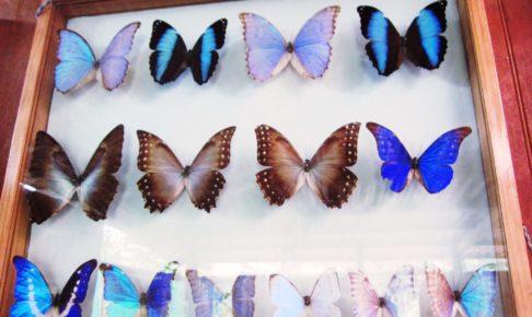 アマゾン, ジャングル, ペルー, マヌー, 国立公園, Chontachaka