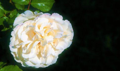 スペイン語, 日本語, 翻訳, 和訳, 歌詞, Corazón sin cara, Prince Royce
