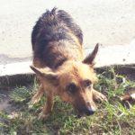 ペルー・クスコで聞いた犬にまつわる怖い話!愛犬失踪事件多発