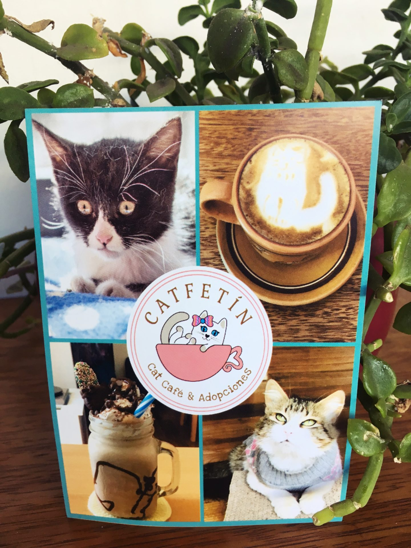 Cat, Cafe, Cafeteria, Cafetin, ペルー, クスコ, ねこ, カフェ