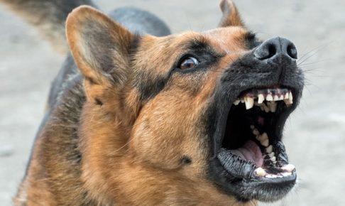 dog, 犬, ペルー, perro, 撃退, 危険