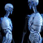 スペイン語で、人体の各部位をなんて言うの?体の外部と内部の単語