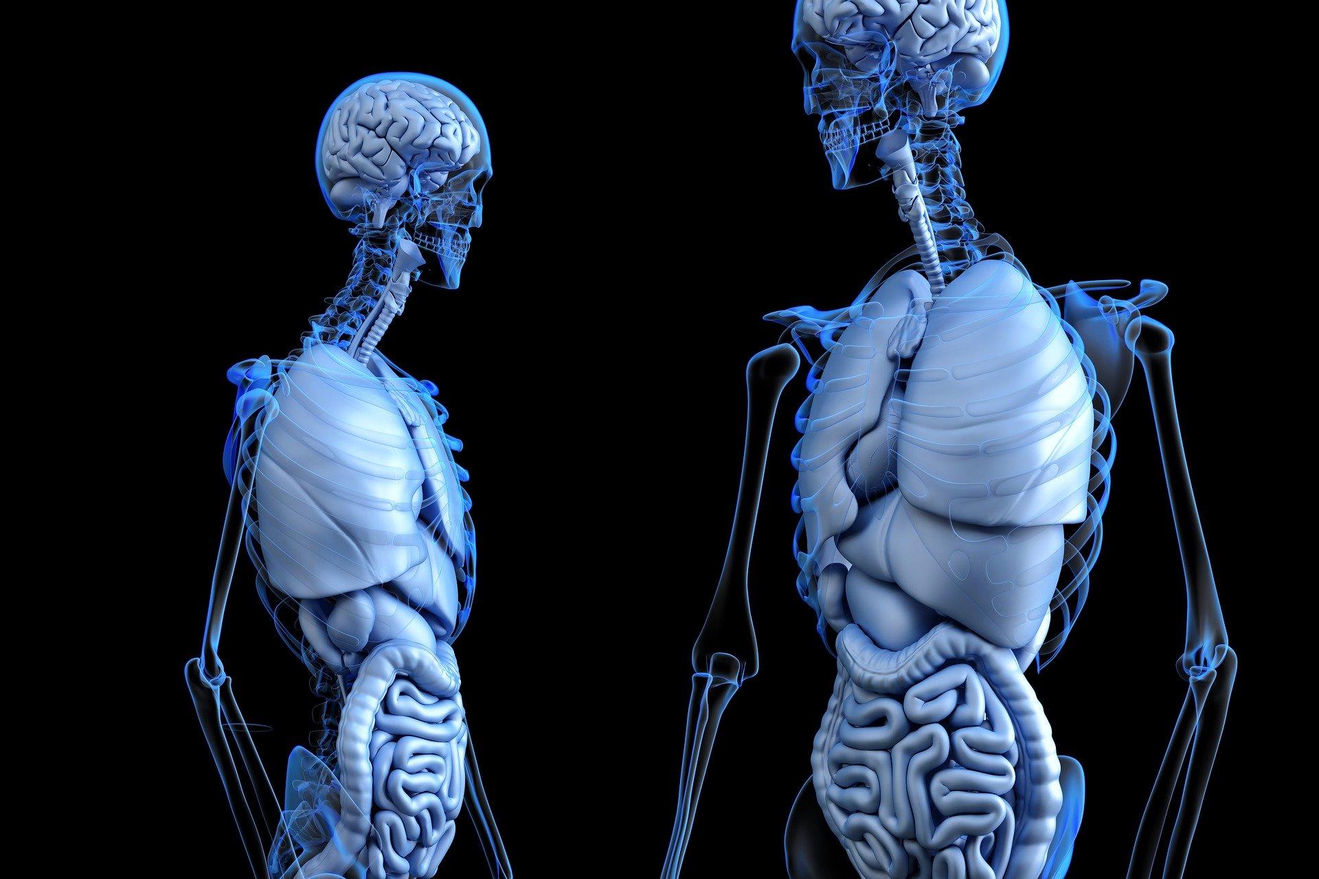 体, 人体, 内臓, 単語, スペイン語, 日本語, 英語