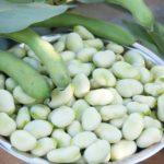 ペルー, アンデス, 食べ物, そら豆, おつまみ