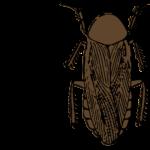 ペルーに本当にゴキブリ酒はあったの?ペルー人とゴキブリ