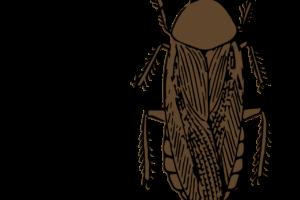 ペルー, ゴキブリ, 酒