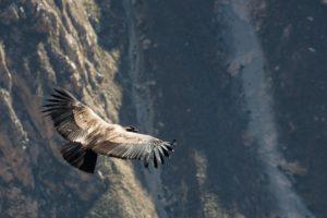 コンドルは飛んでゆく, El Condor Pasa, 歌詞, アンデス, 音楽
