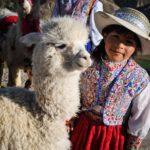 アンデス・ペルーのアルパカとリャマの違い!ウアナコやビクーニャも