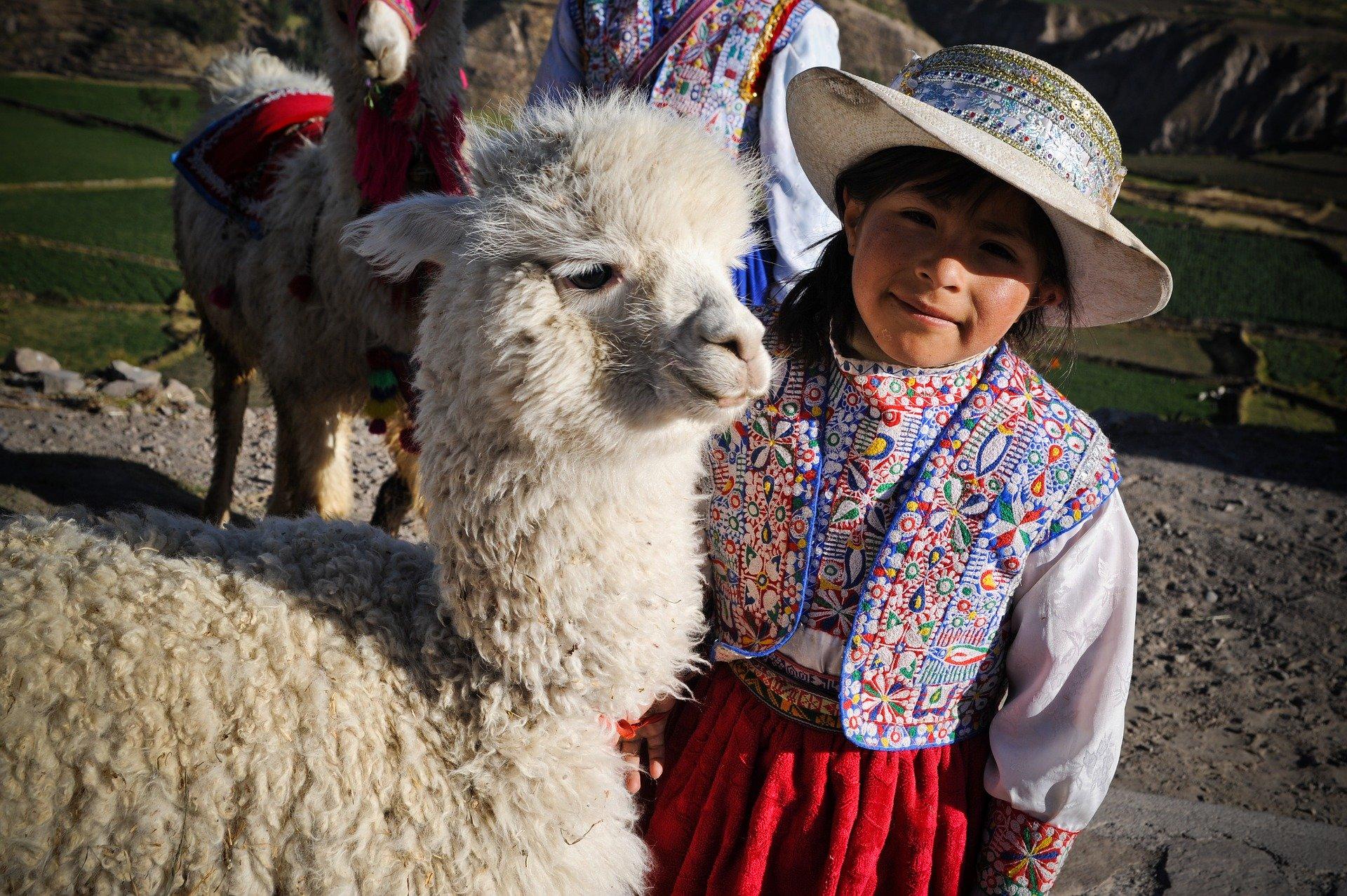 ペルー, アルパカ, Alpaca