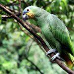南米ペルー・ジャングル・アマゾンの言語Awajúnアワフンの動物や生き物の単語