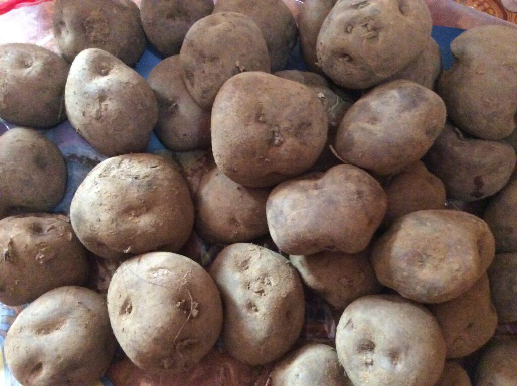 南米, ペルー, クスコ, アンデス, 季節, 野菜, ジャガイモ, papa, sica